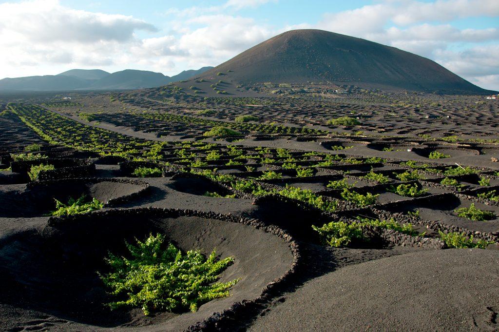 Viñedos volcánicos