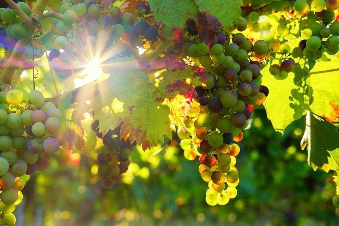El mundo del vino: cifras que llegan directas al corazón