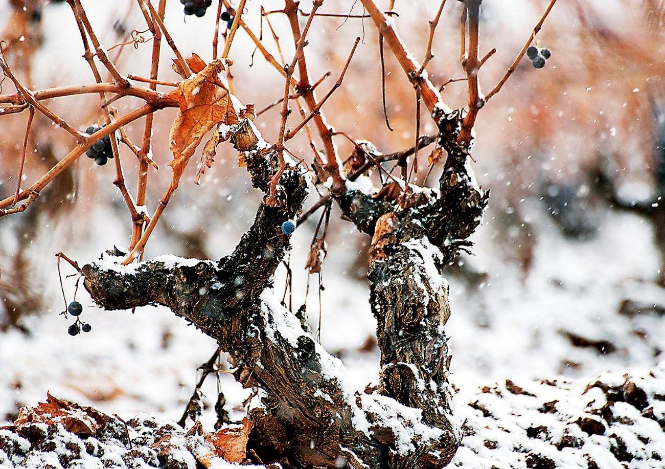 El invierno y su importancia en la construcción de una nueva cosecha