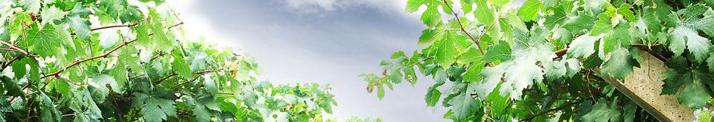Wine Toursim with Bodega Santa Cecilia