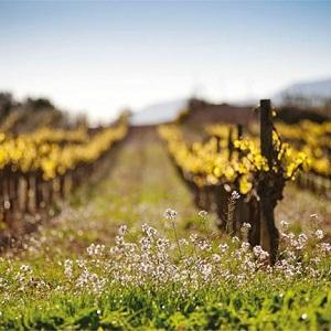 Bodega Santa Cecilia - Vinos ecológicos