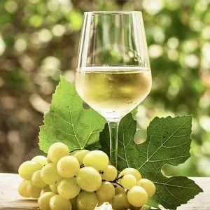 Bodega Santa Cecilia - Vino de Rueda